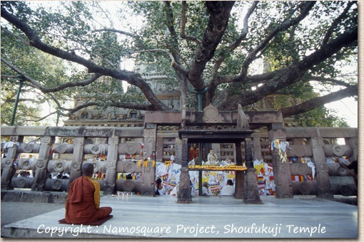 ブッダガヤの大菩提寺 Mahabodhi Temple Complex at Bodh Gaya